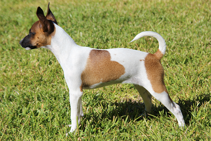 What Is The Least Healthy Dog Breed