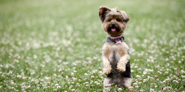 10 Dog Breeds That Shed the Least