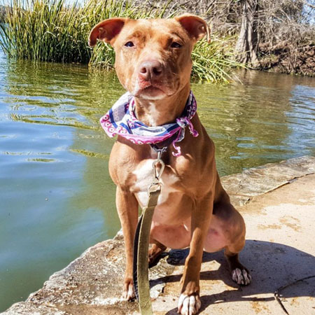 Mixed Breed Mix/Female/Adult