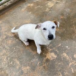 Adopt a dog:Lupin/Affenpinscher/Male/Young,