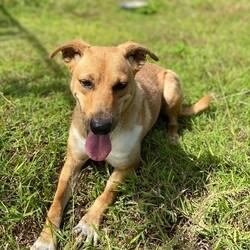 Adopt a dog:Russet (Molly Mae)/Affenpinscher/Female/Adult,